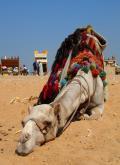 Album foto Cairo